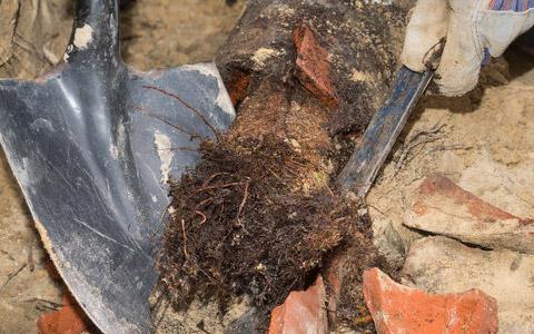 Tree Root Repair